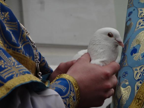 07.04.2014. Выпуск 70 голубей!